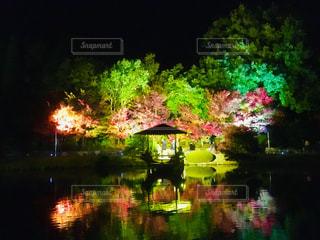 三景園紅葉ライトアップ🍁の写真・画像素材[1642230]