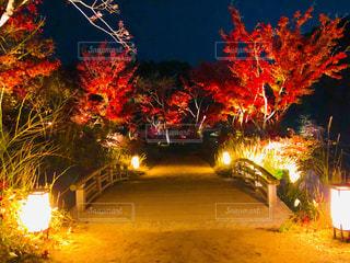 神勝寺の紅葉ライトアップ特別拝観🍁の写真・画像素材[1647947]