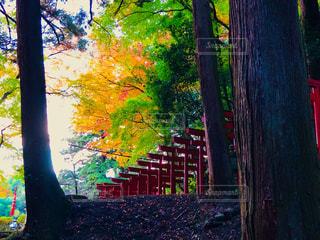 島根県安来市清水町にある瑞光山 『清水寺』の写真・画像素材[1647969]