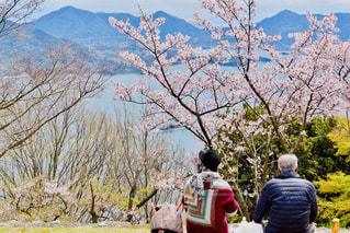 春,桜,後ろ姿,花見,人,後姿,広島,後ろ,広島県,老夫婦,三原,三原市,筆影山展望台