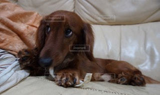 犬の写真・画像素材[14107]