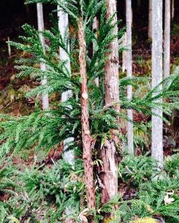 森林の写真・画像素材[56187]