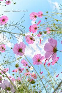 花の写真・画像素材[246659]