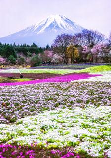 春の写真・画像素材[488431]