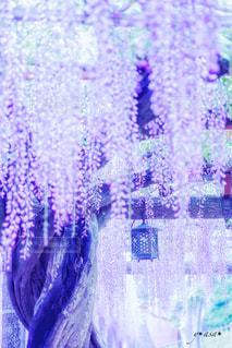 花の写真・画像素材[488450]