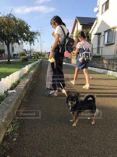 犬の散歩の写真・画像素材[1629973]