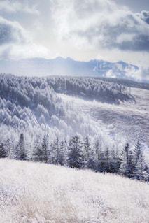 霧氷風景の写真・画像素材[1788138]