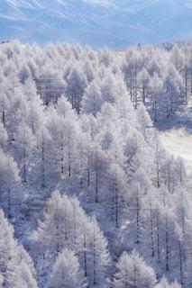 霧氷いっぱいver2の写真・画像素材[1788297]
