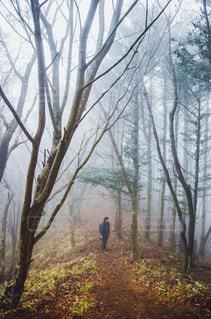 枯木の森を彷徨うの写真・画像素材[1828871]