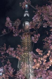 夜桜と東京スカイツリーの写真・画像素材[1838432]