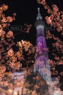 春,桜,夜景,東京,ピンク,星空,花見,夜桜,サクラ,観光,東京スカイツリー,ライトアップ,旅行,暖かい,レジャー,一眼レフ,河津桜,押上,3月,さくら