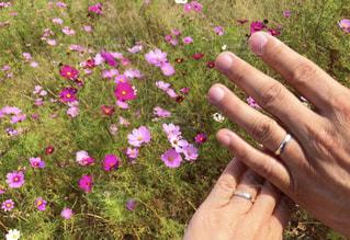 花を持っている手の写真・画像素材[1619650]