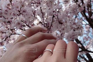 はじめての花見デートの写真・画像素材[2010058]