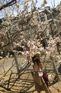 梅を撮るのに必死な女。笑の写真・画像素材[3059697]