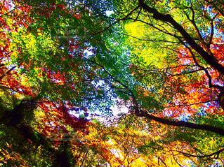 紅葉する木々の写真・画像素材[1632589]