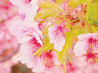 近くの花のアップの写真・画像素材[1859273]