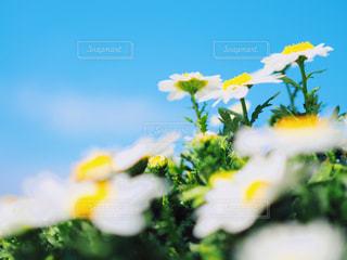 青空と春のお花の写真・画像素材[1861049]