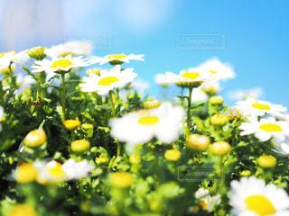 お花と青空の写真・画像素材[1861064]
