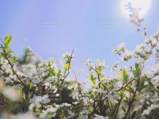 空とお花の写真・画像素材[1871780]
