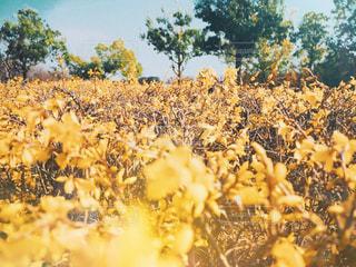 黄色のお花の写真・画像素材[1884726]