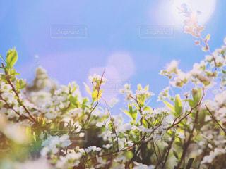 白いお花の写真・画像素材[1884769]