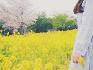 桜と菜の花と私の写真・画像素材[2043934]
