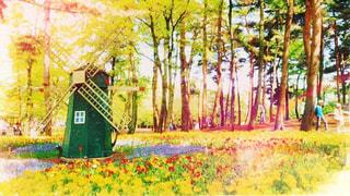 森の木の写真・画像素材[2210915]