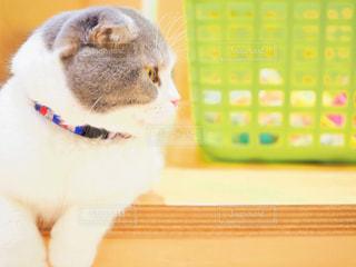 ネコの写真・画像素材[2292263]