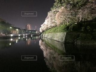 桜,夜桜,駿府城,夜の散歩