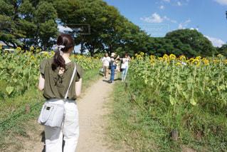 ひまわり畑デートの写真・画像素材[1646968]