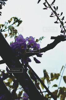 空,花,植物,きれい,紫,水滴,藤,樹木,癒し,雨上がり,雫,beautiful,しずく,草木,purple