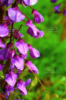 空,花,植物,きれい,紫,水滴,景色,鮮やか,藤,美しい,樹木,癒し,雨上がり,雫,beautiful,しずく,草木,purple