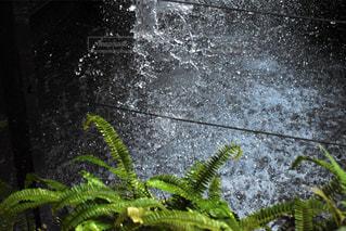 緑,きれい,水,水滴,水面,葉,水しぶき,beautiful,素敵,草木,シダ