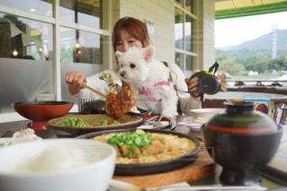 家族,犬,食べ物,ランチ,昼食,ごはん,チキン,母,カツ丼,昼ご飯