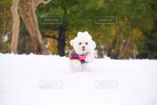雪の妖精さんの写真・画像素材[1758861]