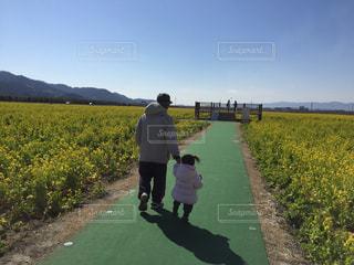 子ども,風景,屋外,菜の花,手繋ぎ,仲良し,人物,幼児,畑,孫