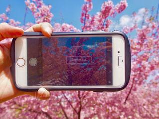 公園,春,カメラ,桜,ピンク,スマホ,満開,お花見,iphone,Spring,ハッピィ