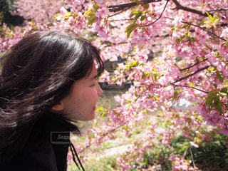 公園,春,カメラ,桜,ピンク,スマホ,満開,お花見,iphone,幸せ,ミラーレス,Spring,初恋,花粉,ハッピィ