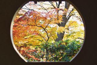 窓からの紅葉の写真・画像素材[1645003]