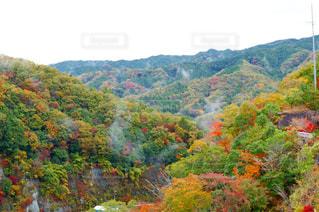 鮮やかな秋色の木々と立ち上るもやの調和の写真・画像素材[1645200]