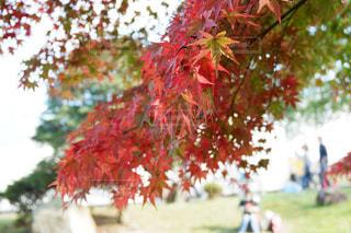 紅葉と秋を楽しむ人々の写真・画像素材[1653358]