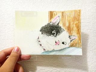 猫,動物,イラスト,水彩,ペット,手書き,ボールペン,手描きイラスト