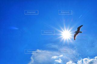 空を飛んでいる鳥の写真・画像素材[1862835]