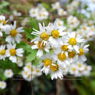 花も雫も、控えめに輝く。の写真・画像素材[2111927]