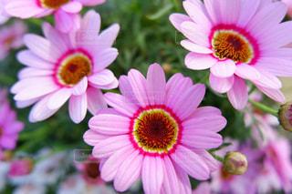 花のクローズアップの写真・画像素材[2137608]