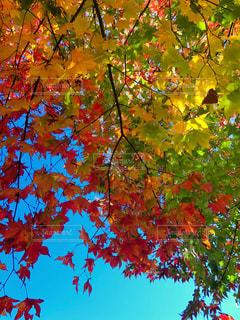 近くの木のアップの写真・画像素材[1646570]
