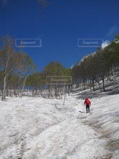 自然,風景,雪