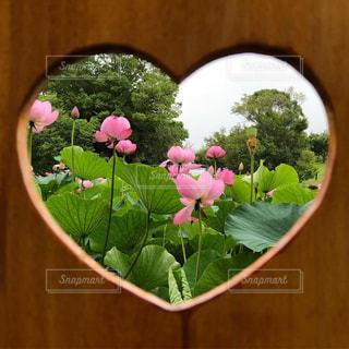 植物に紫色の花で満たされた花瓶の写真・画像素材[2278568]