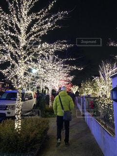 夜,アメリカ,ライト,イルミネーション,クリスマス,ツリー,ダウンタウン,街路樹