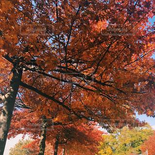 ニューヨークの郊外の紅葉の写真・画像素材[1646259]
